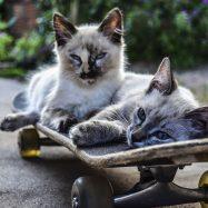 人生にとって大切なことは、スケートボードが教えてくれた。