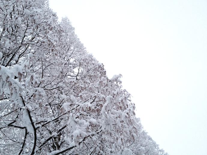 スケボー通販ショップHi5ブログ2012-02-18